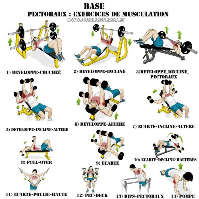 The 15 Best Exercises For Your Chest Faculty Of Medicine