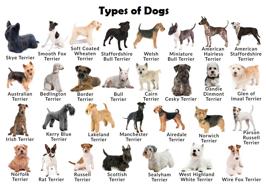 types of dogs.jpg