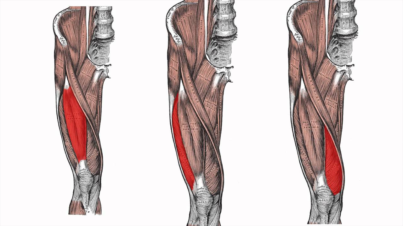 Anatomy Mnemonics Lower Limbs Faculty Of Medicine