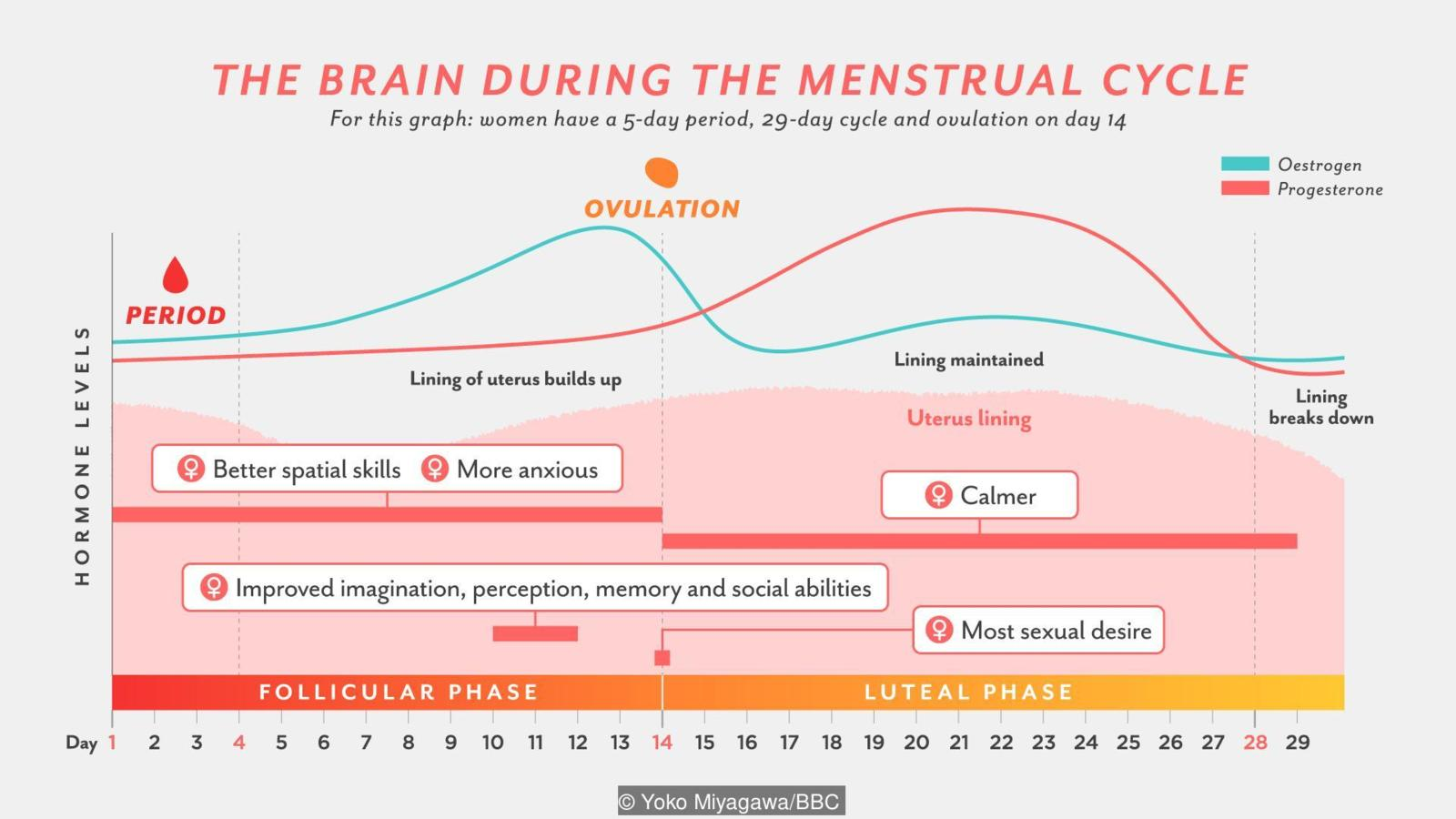 The normal menstrual cycle and the control of ovulation