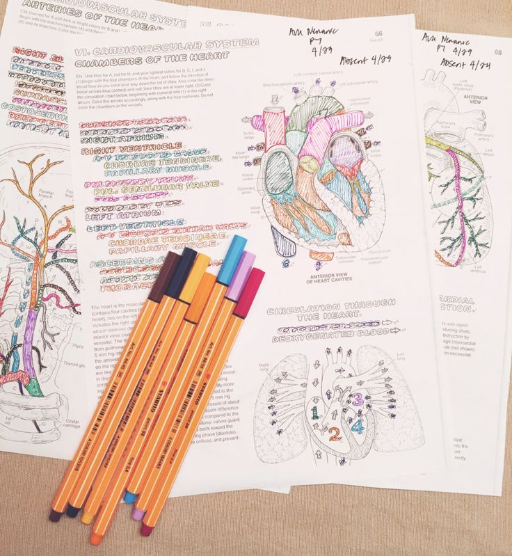 How To Study For Your Next Test Like A Pro | Faculty of Medicine