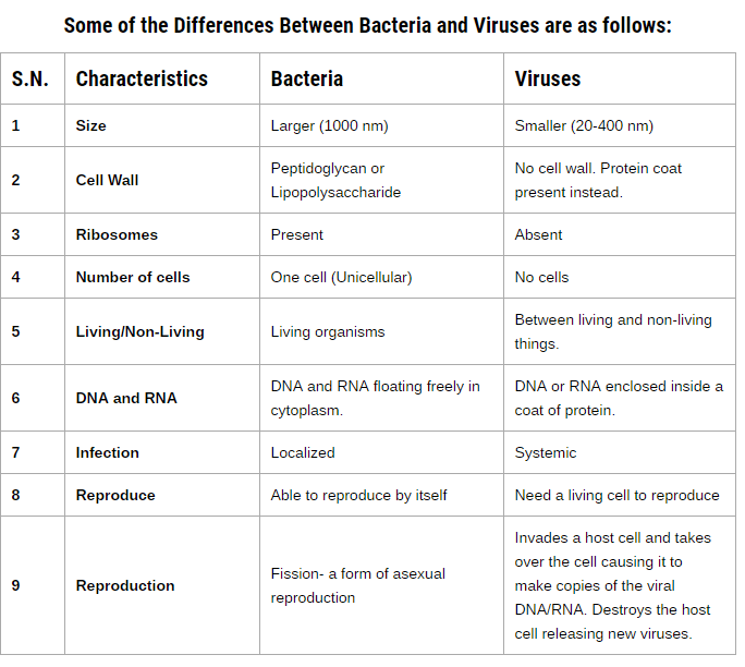 identify the differences between bacteria viruses -viruses need a living host bacteria can grow on non-living surfaces -antibiotics don't work on viruses, because antibiotics interfere with cellular processes that viruses do not perform differences between bacteria and viruses are.